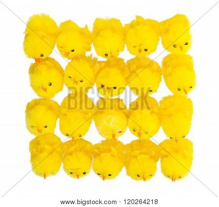 Abundance Of Easter Chicks, Top View