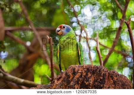 Gorgeous brightly colored parrot. The picturesque South American bird in the zoo of exotic tropical birds