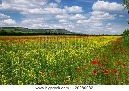 Field With Poppies And Alfalfa