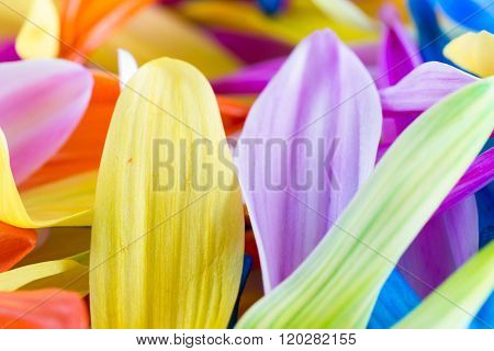 Colorful Petal Background
