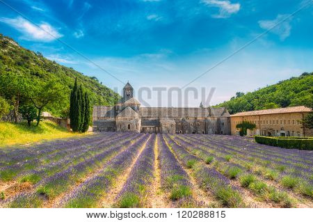 Beautiful lavender field and an ancient monastery abbey Abbaye N