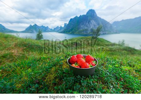 Tasty organic strawberries in Norway mountains
