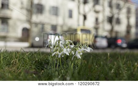 Snow Bells And Parked Cars