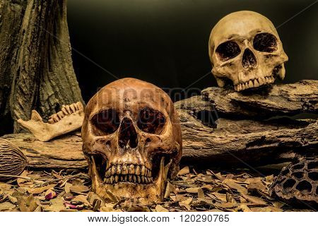 Still Life Couple Human Skull Art Abstract Background