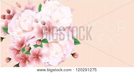Pink Peony Macro Background
