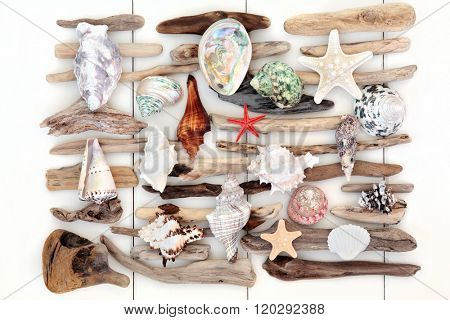 Sea shell and driftwood abstract collage over white wood background.