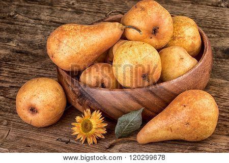 Pears Thanksgiving still life
