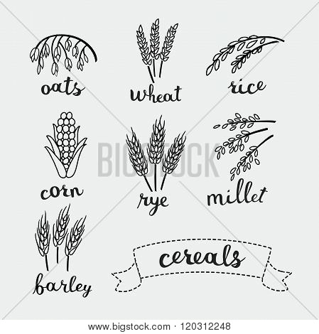 Ripe ears of cereals with inking and names