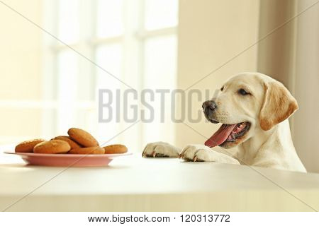 Cute Labrador dog and cookies against wooden table on unfocused background