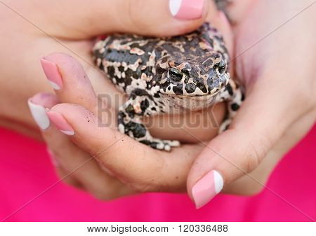 Cute Frog On Female Hands