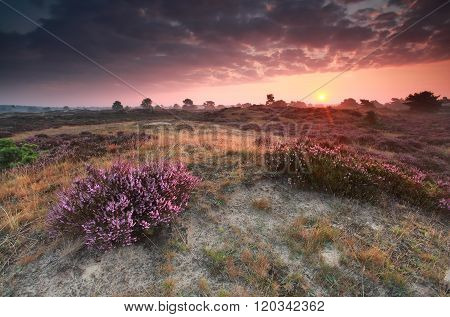 Purple Summer Sunrise On Heathland