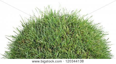 Small Grass Turf Hillock Isolated on White Background
