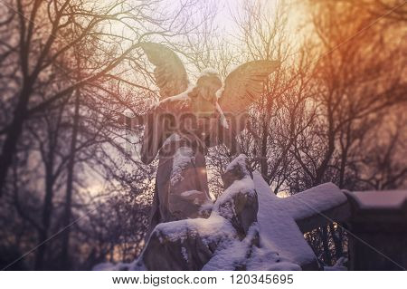 Angel statue illuminated by sunlight. Cemetery during the winter
