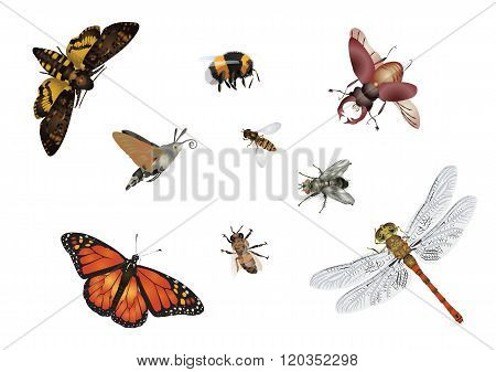 Amazing insects set - flying