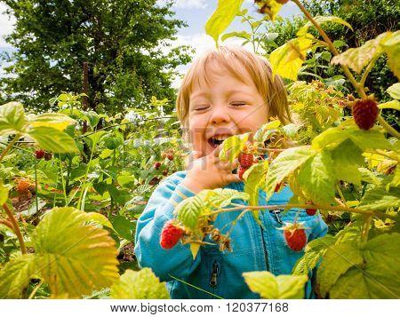Picking up raspberries