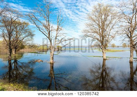 Spring Landscape Trees Are Flooded