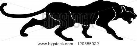 black Panther leopard cat walks