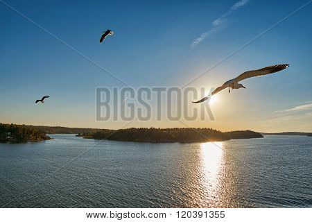 Sea Gull flying into sunrays at Sea