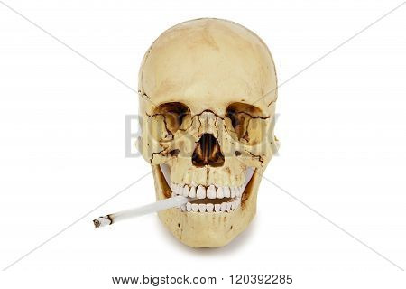 Human Skull Smoking A Cigarette Isolated On A White Background