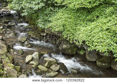 Brook and green trees