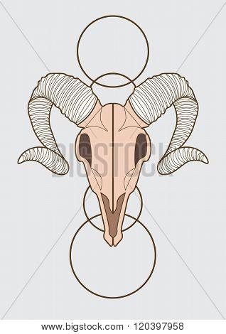 illustration of ram skull. vector eps 10
