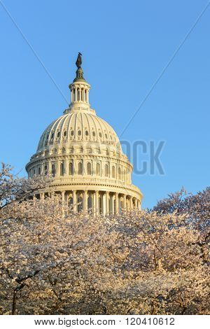 Washington DC in Spring time - Capitol Building with spring blossoms