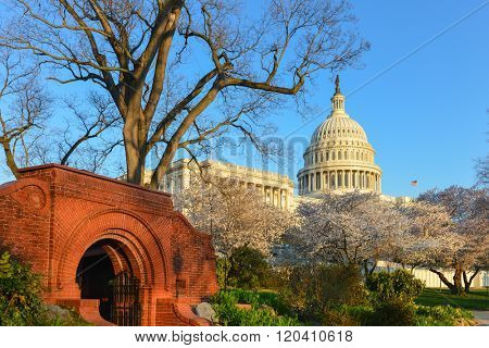 Washington DC in Spring time - Capitol Building and spring blossoms