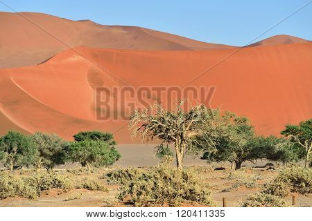 Namib-naukluft National Park, Namibia, Africa