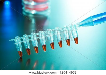 pcr analysis dna profiling