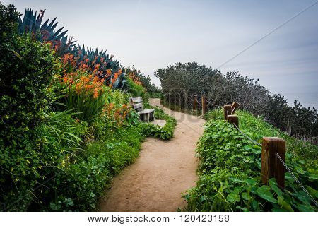 Plants And Bench Along A Walkway In La Jolla, California.