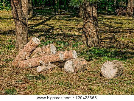 Heap Of Sawn Pine Logs In A Park
