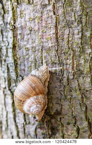 Snail creeping up the tree. Macro shoot.
