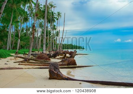Tropical beach after Tsunami