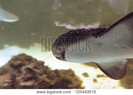 Shining down on whale shark