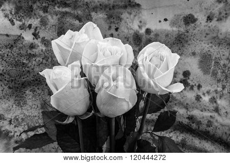 Pink Roses On The Bright Background