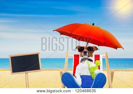 Dog Beach  Cocktail