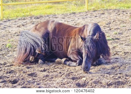 brown horse lying on the sand in the paddock