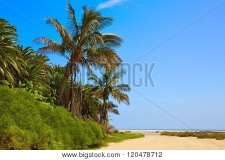 Jandia Sotavento beach Fuerteventura at Canary Islands playa Barca