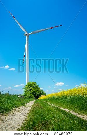Windmill on the Yellow Colza Field