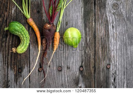 Ugly Beetroot, Carrot  And Cucumber