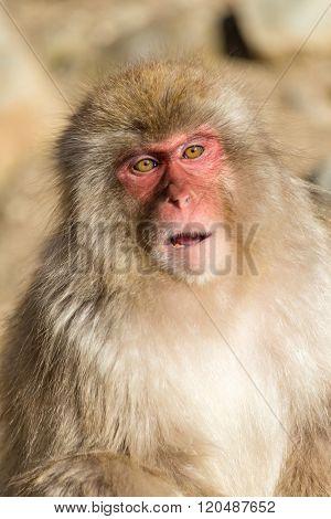 Beautiful monkey