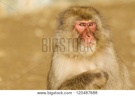 Close up of monkey