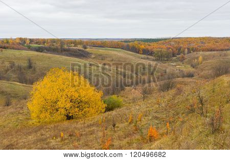 Autumnal rural landscape with ravine in central Ukraine . .