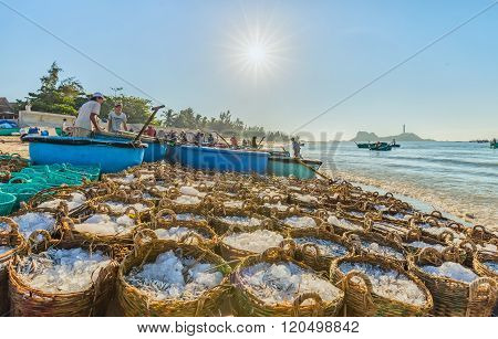 Anchovies baskets under morning sun