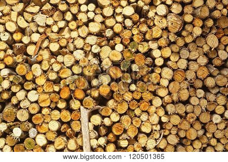 Abstract photo of a pile of natural wooden logs background