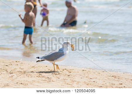 Seagull On The Beach Seaside Dragged A Piece Of Bun With Holidaymakers