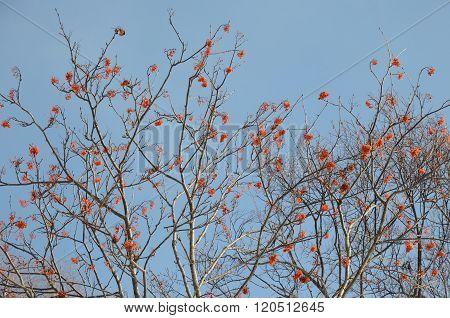 Red rowan berries against blue winter sky