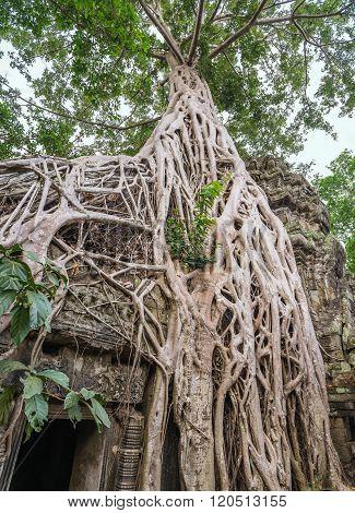 Ta Prohm Temple , Siem Reap , Cambodia