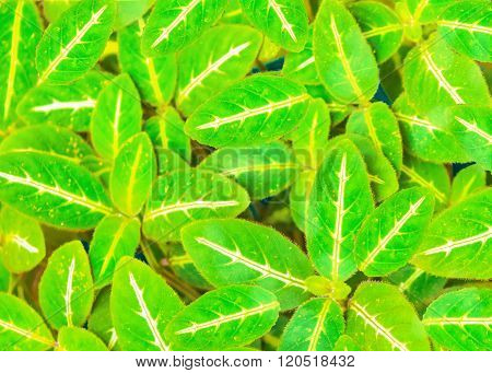 Green Leaves Photo Pattern