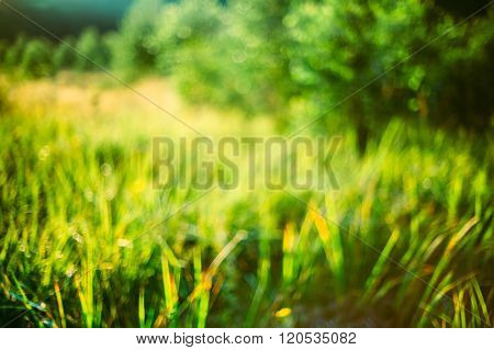 Spring Nature Green Grass Natural Blurred Absract Background. Bo